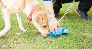 recogedor de excrementos de perro