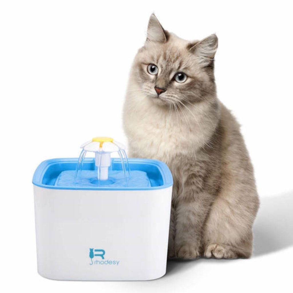 fuente para gatos