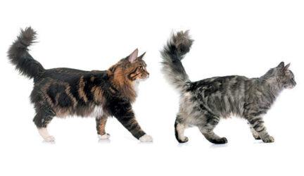 Lenguaje corporal del gato