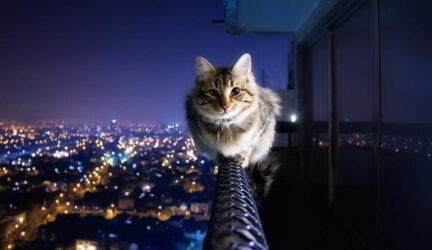 Mi gato se sube a todos lados