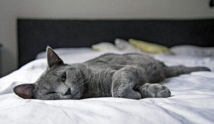 mi gato orina en la cama