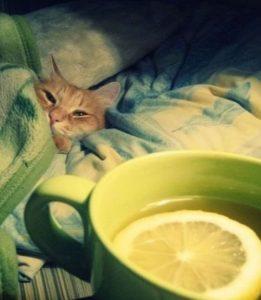 mi gato tiene fiebre