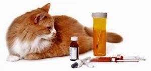 mi gato tiene diabetes