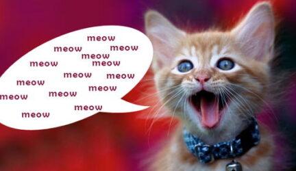 Por qué maúllan los gatos, explicación de los motivos