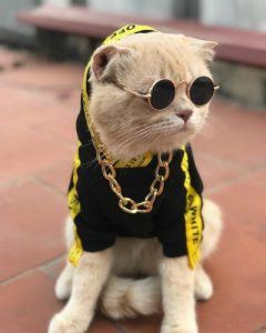 nombre de gato macho
