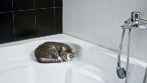 Mi gato me sigue al baño