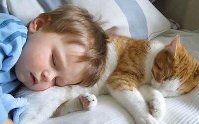 mi gato duerme conmigo