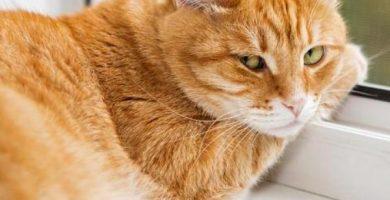 Desventajas de tener un gato