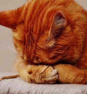 Los gatos tienen sentimientos