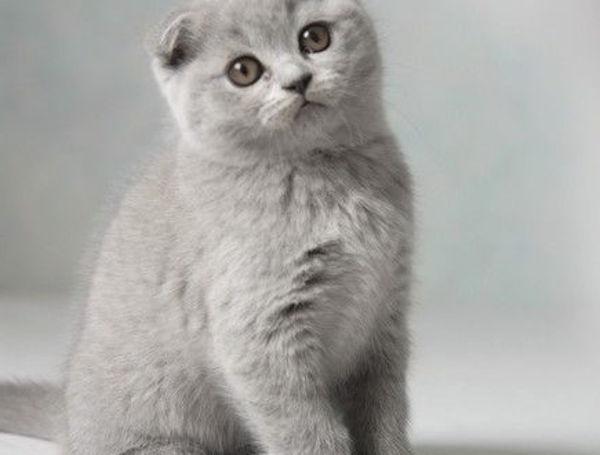 Los gatos más bonitos del mundo