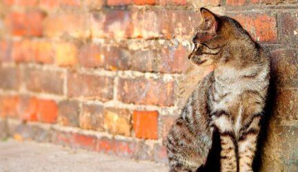 Por que los gatos se van de casa y no vuelven