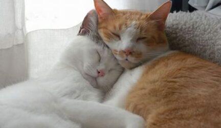 Ventajas de tener un gato
