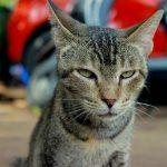 Gatos con síndrome de Down