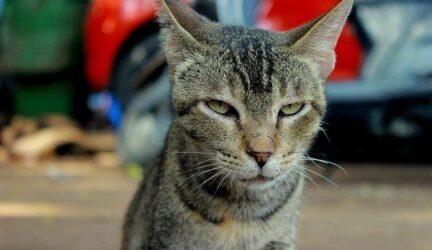 gatos con sindrome de down