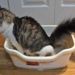 Arena para gatos hecha en casa, Cómo hacer arena para gatos ecológica