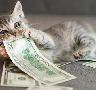 rascador gatos barato