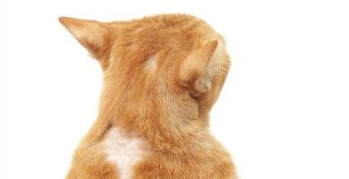a mi gato se le cae el pelo