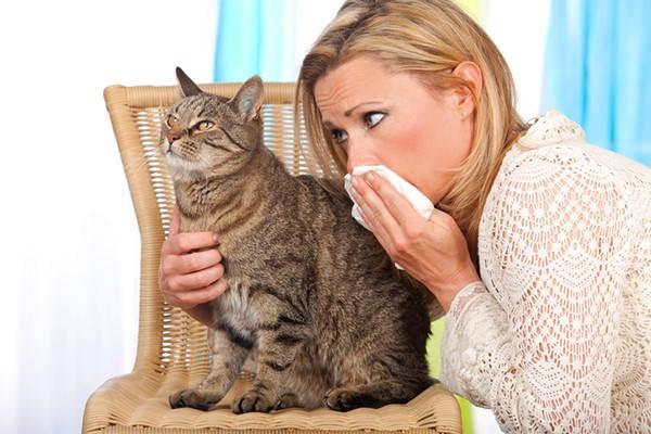 gatos que no dan alergia