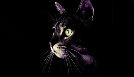 los gatos ven en la oscuridad