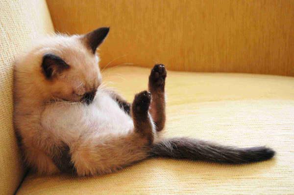 por que los gatos duermen tanto