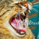 why does my cat breath smell like fish header