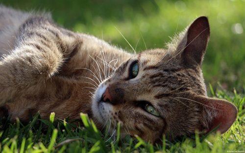 gatos e ibuprofeno
