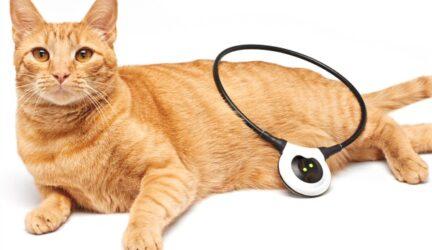 ¿Tu gato tiene dolor?