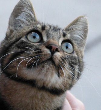 ¿Son los gatos domésticos más salvajes de lo que pensamos?