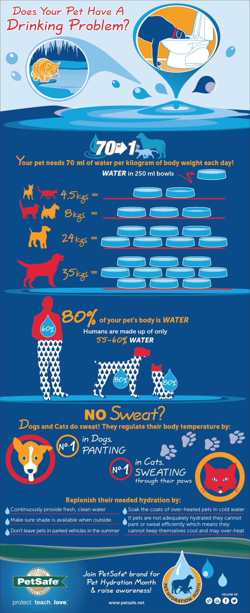 hidratación de mascotas