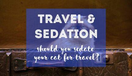 Debo sedar a mi gato para viajar o no
