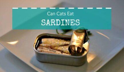 can cats eat sardines header