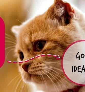 can i give my cat ibuprofen header