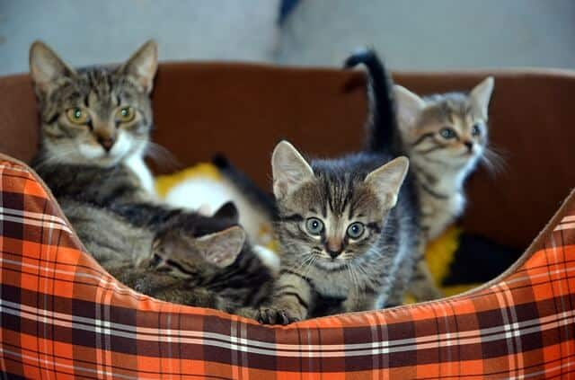 Mi gata tiene gatitos ¿Puedo moverlos?