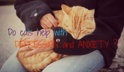 do cats help with depression and anxiety