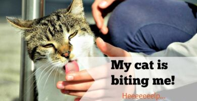 how to stop my cat from biting me header