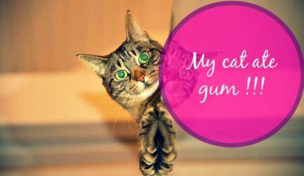 my cat ate gum header
