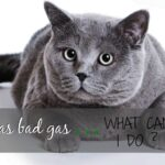 my cat has bad gas how can I help him header