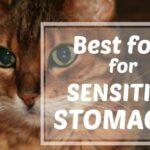 Gatos con estómago sensible