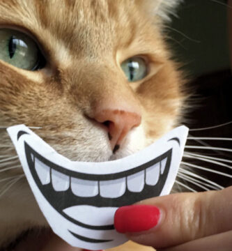 puede el gato comer helado