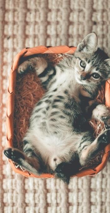 Mi gato tenía gatitos ¿Puedo moverlos? | Gatito esponjoso