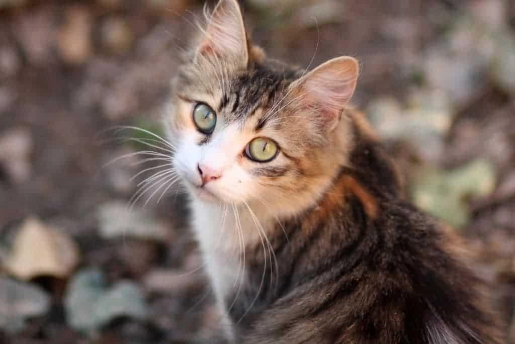 gato al aire libre remedios naturales para calmar a los gatos