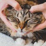 Los mejores remedios naturales para calmar a los gatos