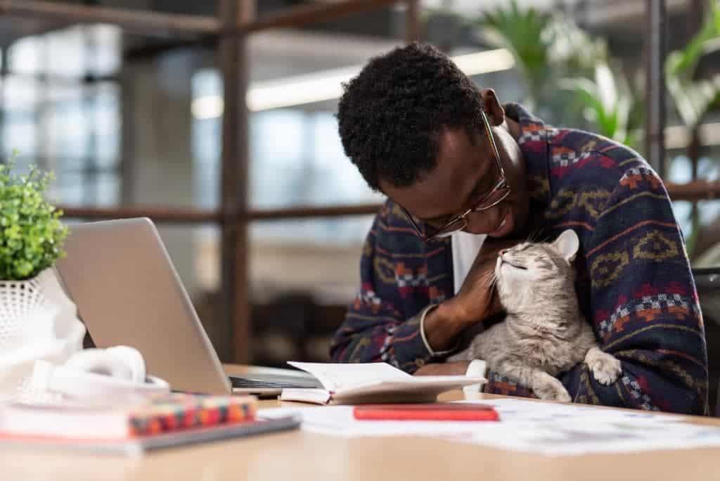 gato acurrucado con el hombre en la oficina
