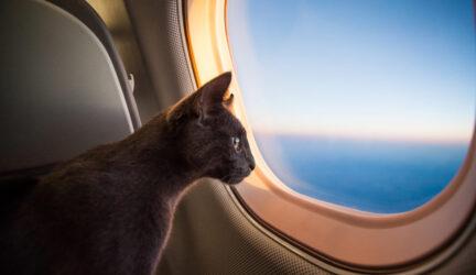 como viajar en avion con gatos